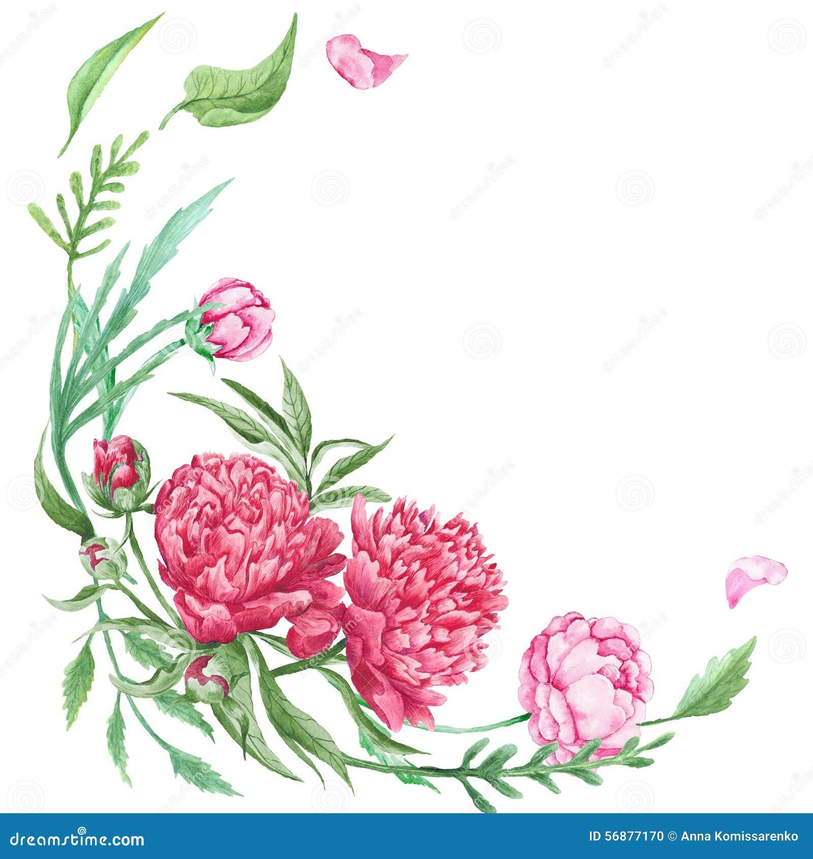 Angolo floreale di estate della peonia