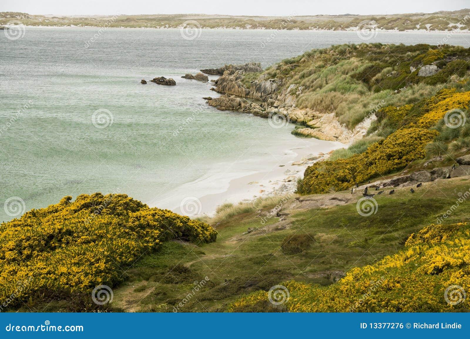 Angra aciganada - Ilhas Falkland