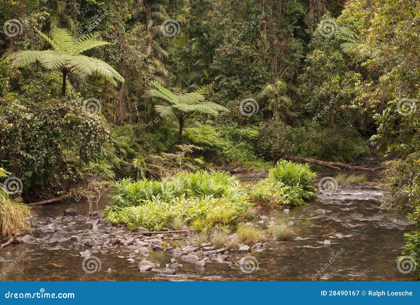Angra da selva