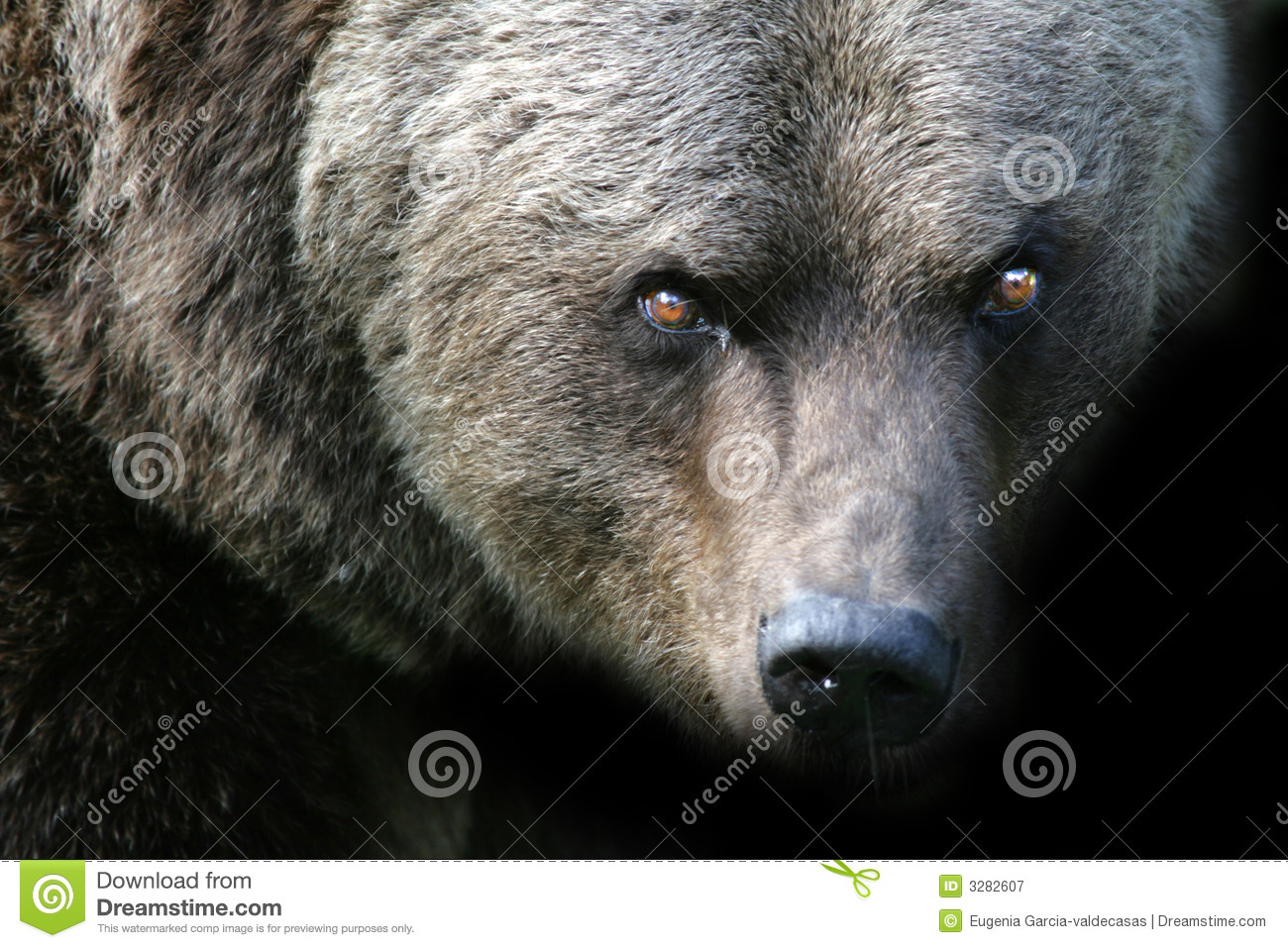 Angry Bear Royalty Free Stock Photography - Image: 3282607