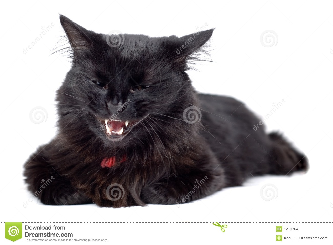 angry black cat stock images