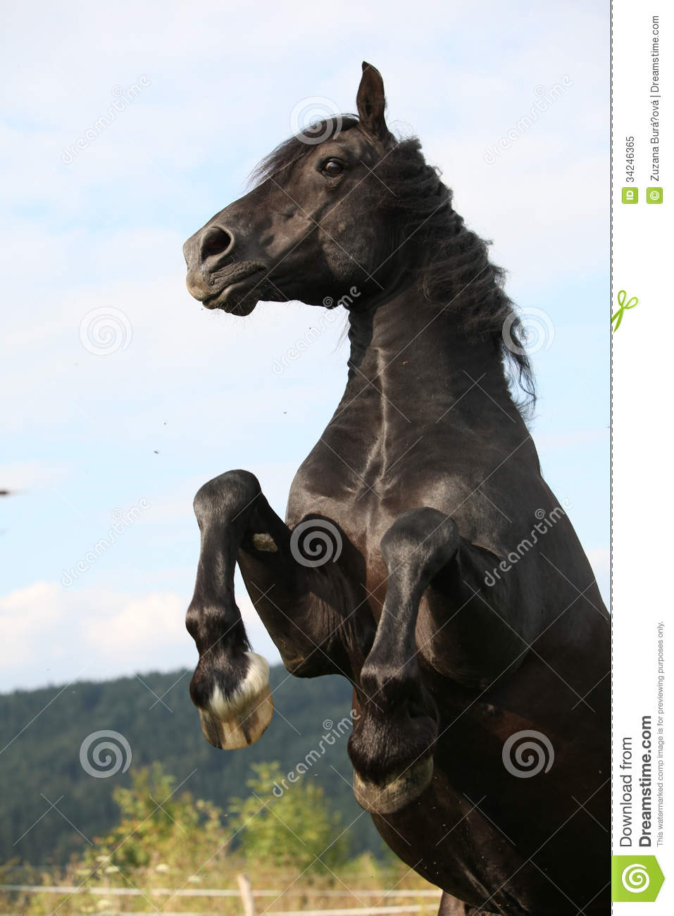 Angry horse - photo#11