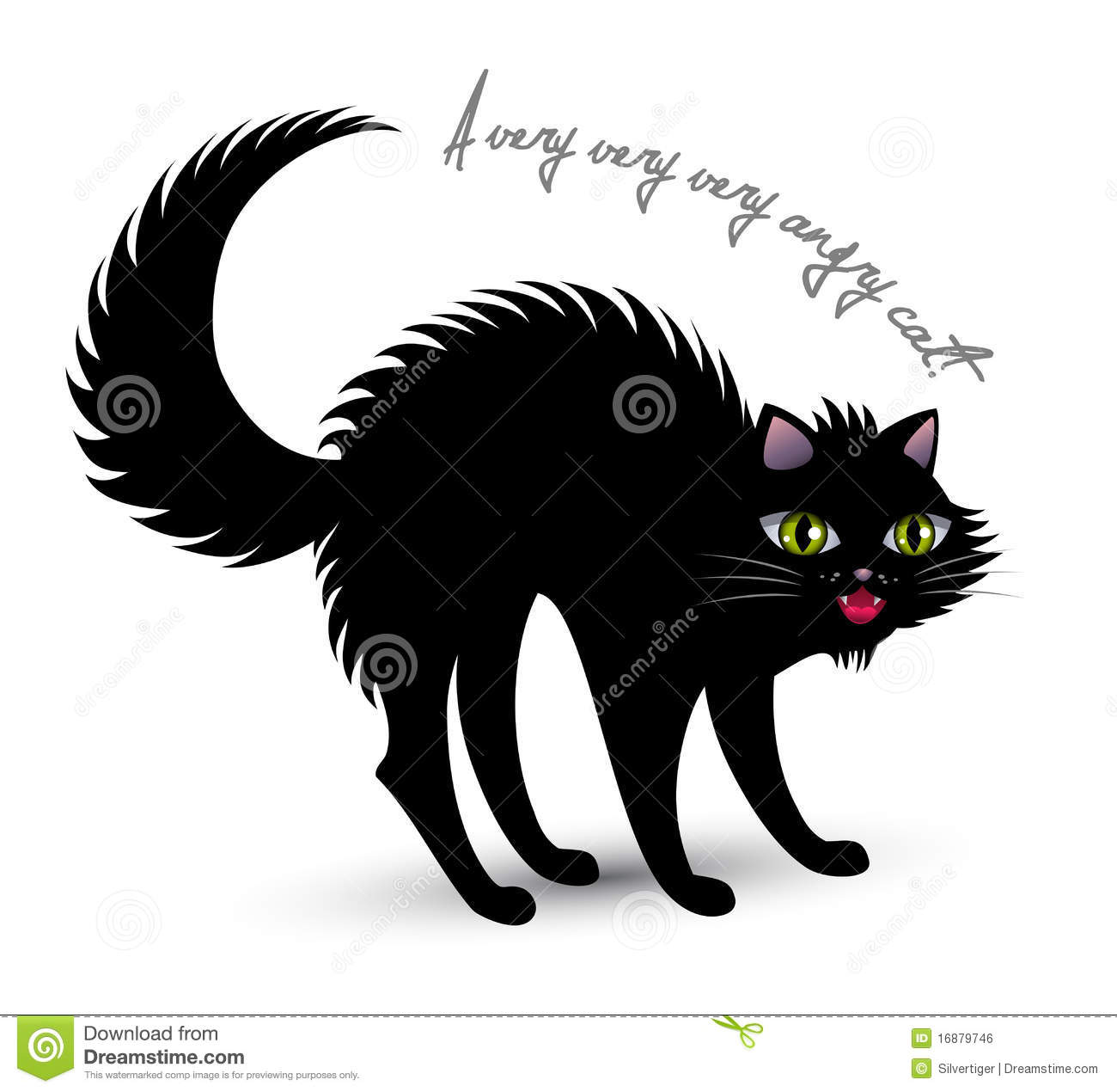 Cat And Woman White Background