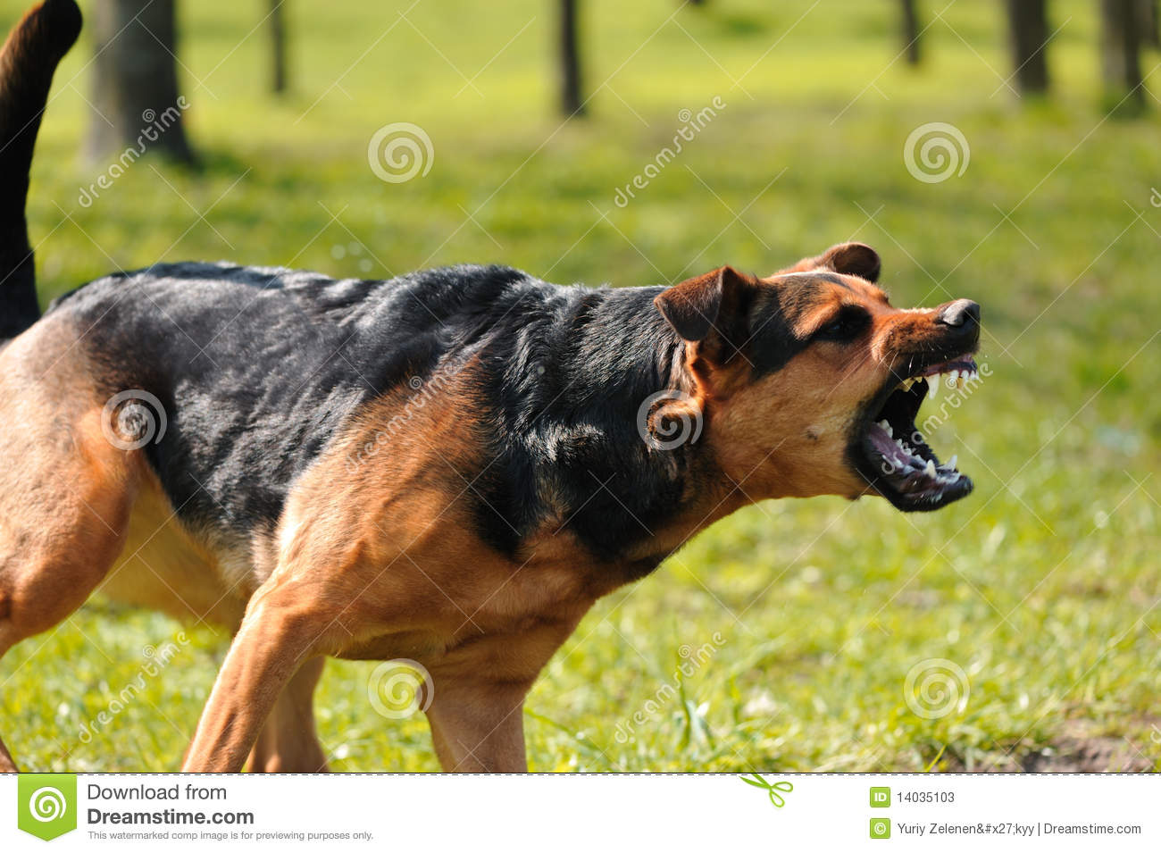 Free Video Of Barking Dogs
