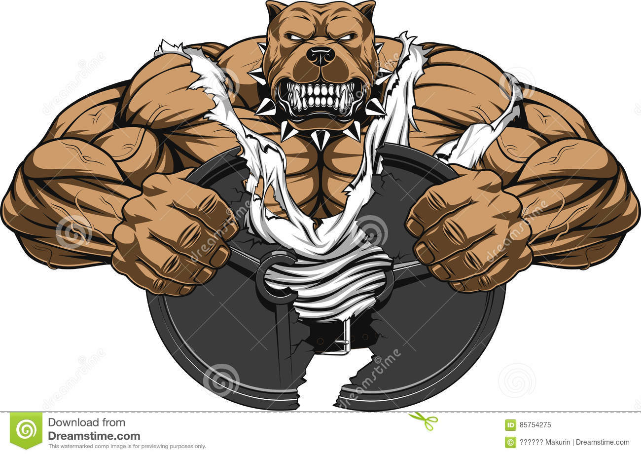 Angry dog bodybuilder stock vector image of fangs nature - Cartoon body builder ...