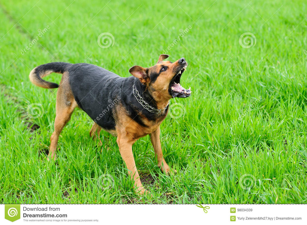 Angry dog on the green grass