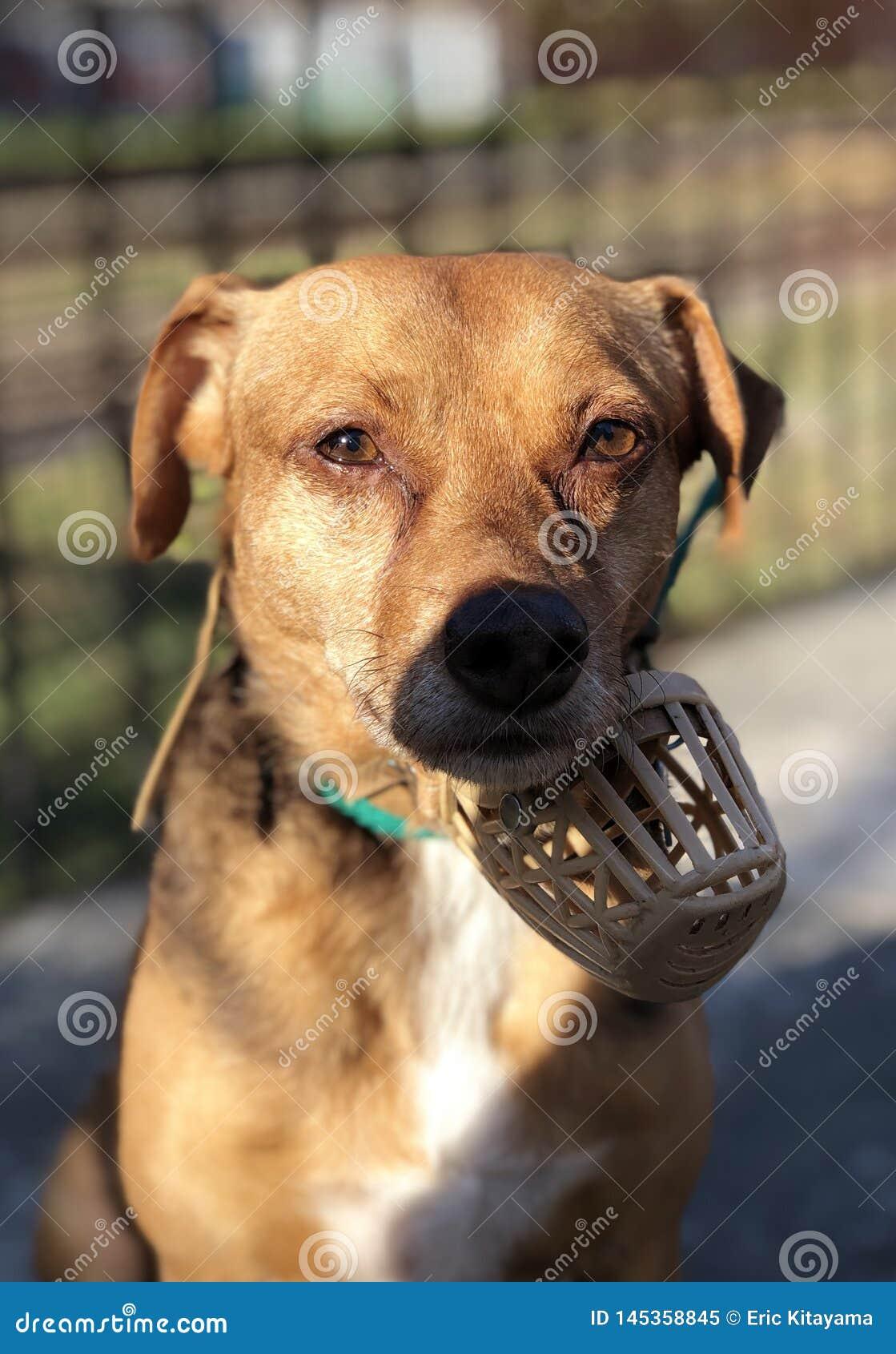 Angry dog stock image  Image of meme, camera, watching