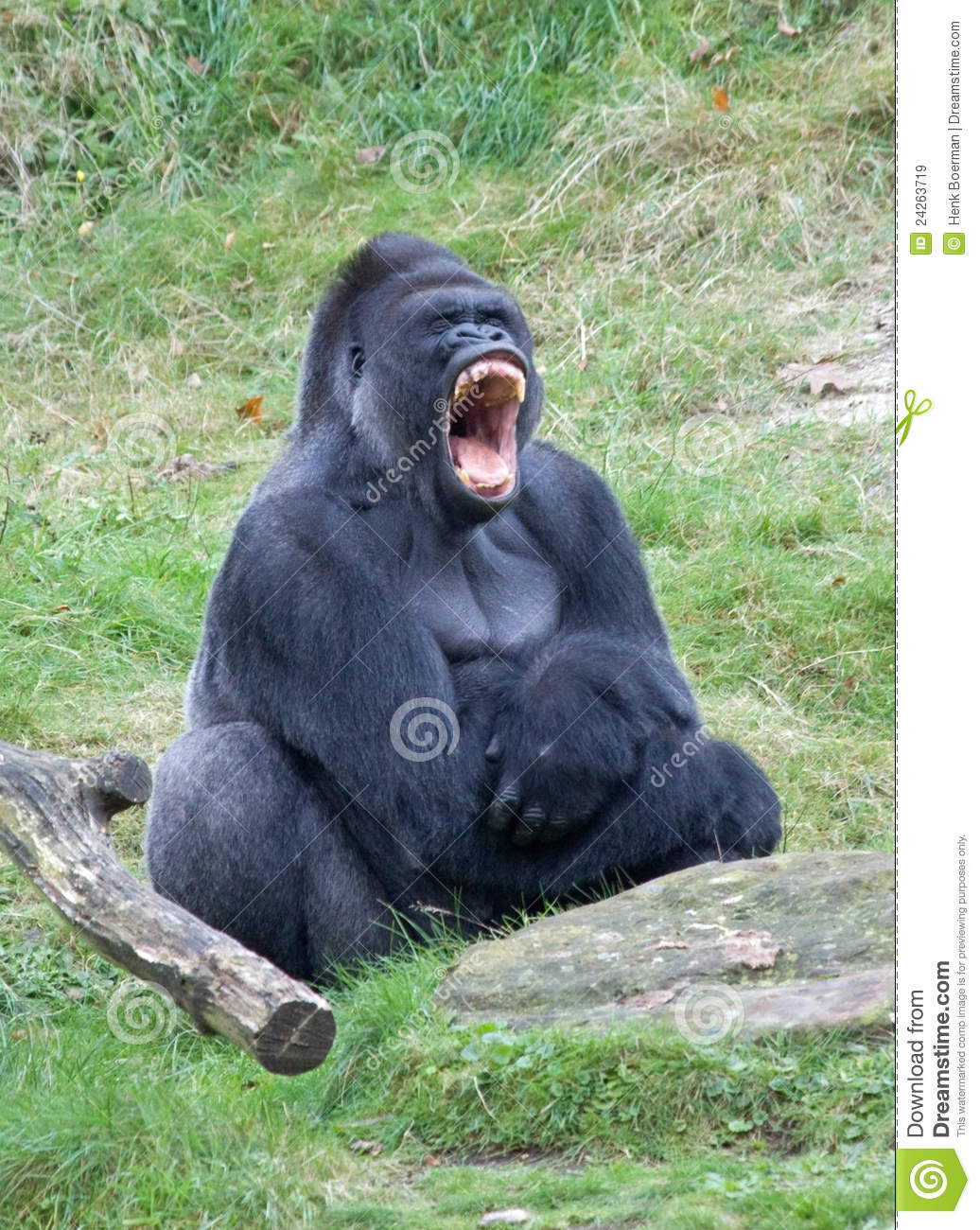 Angry gorilla stock image. Image of father, scary, kong ...