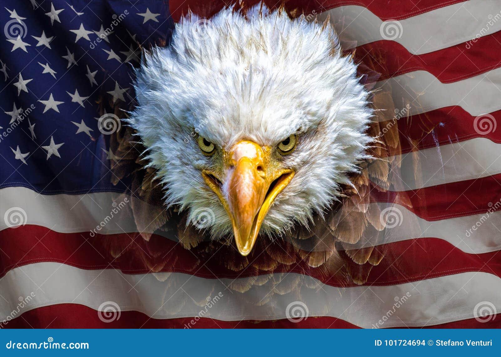 An angry north american bald eagle on american flag