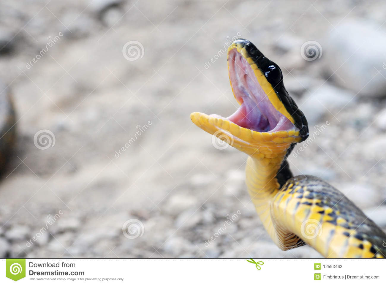 Image result for snake angry