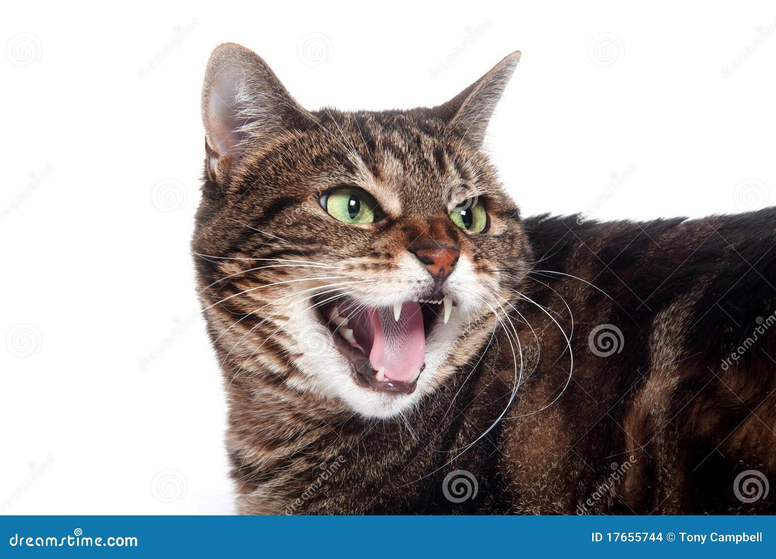 wellness brand cat food