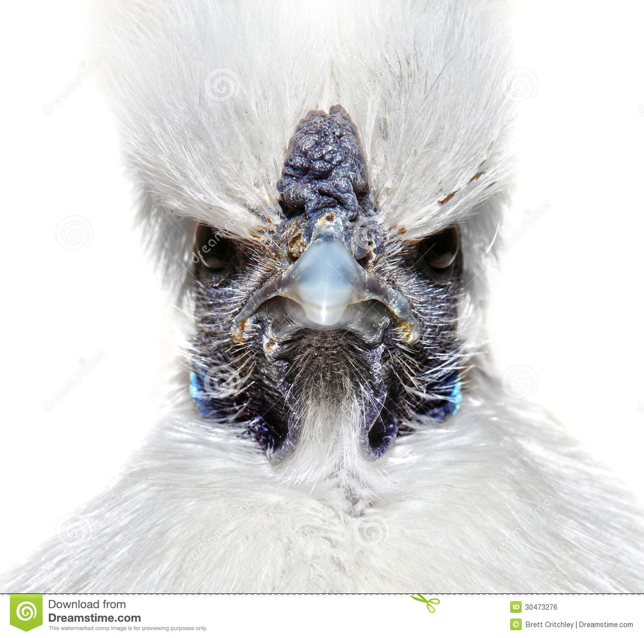 Angry Bird White Angry white chicken st...
