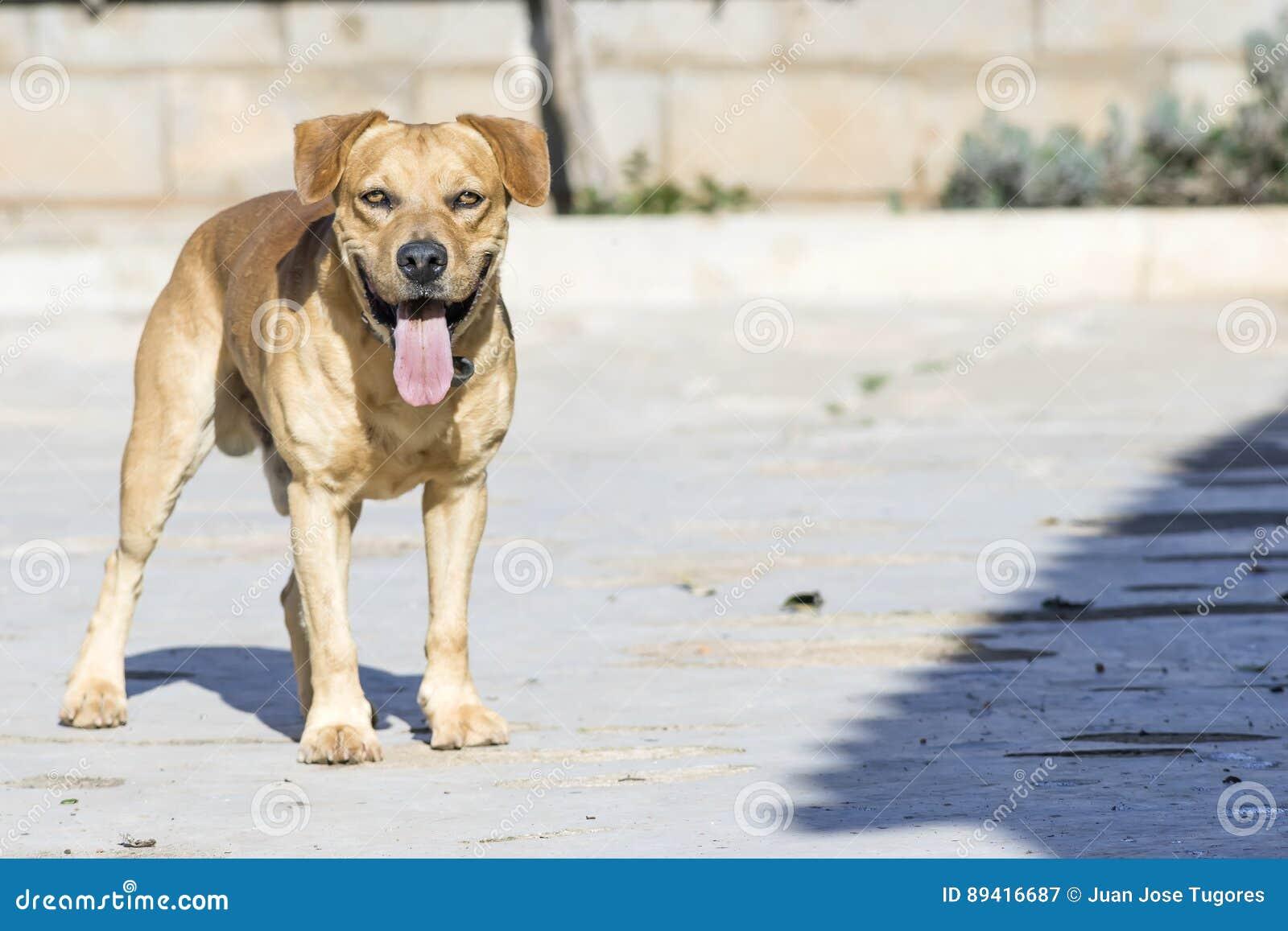 Animais de animal de estimação, cães