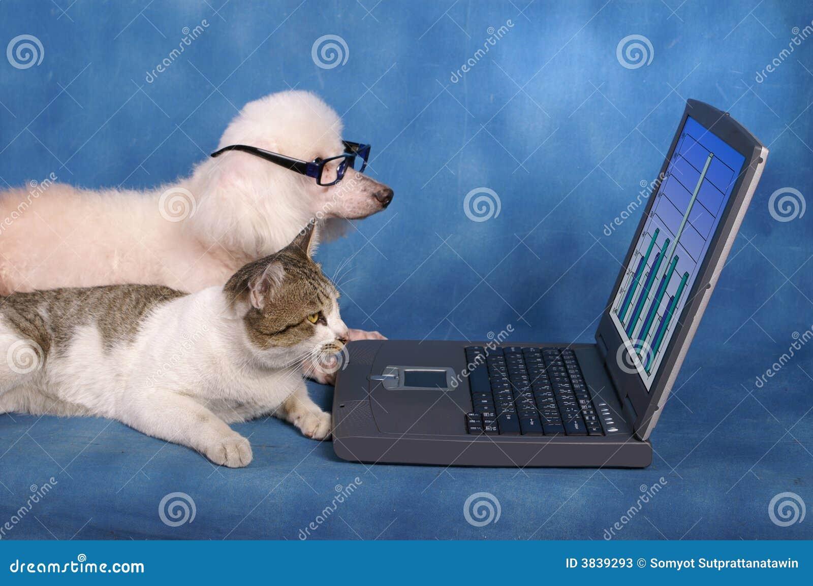 Animais de estimação do negócio