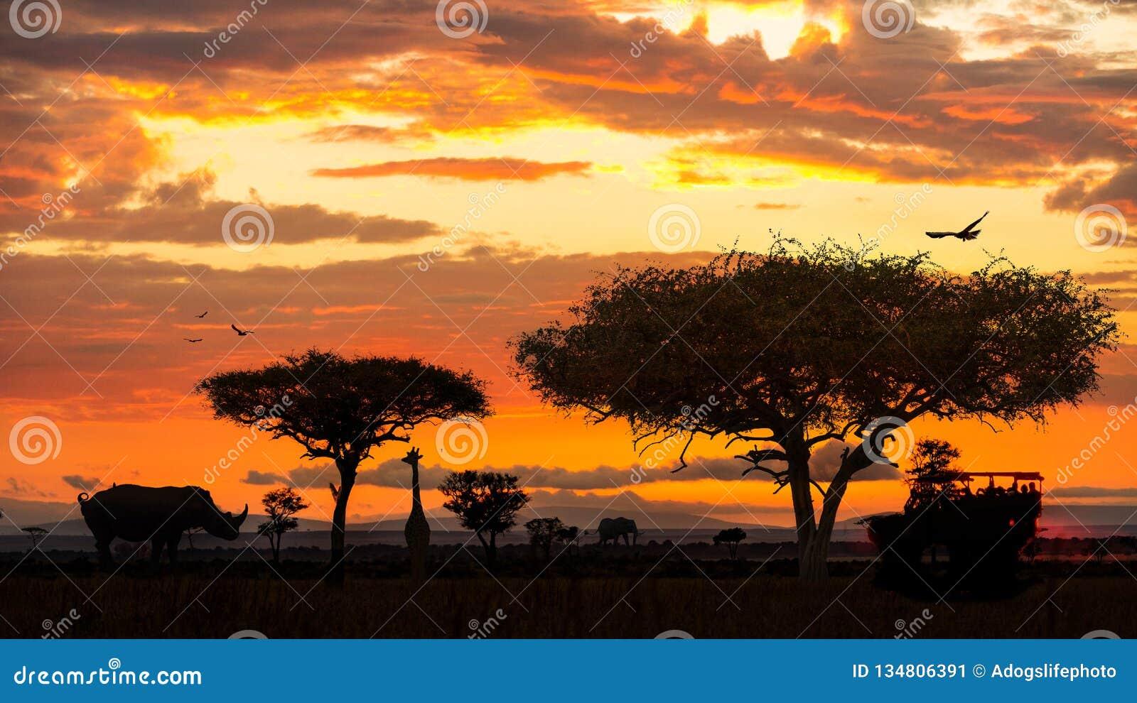 Animais selvagens africanos Safari Drive no por do sol