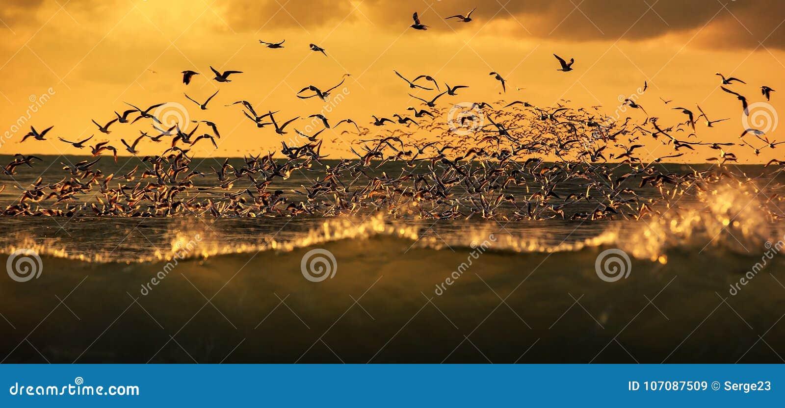 Animais selvagens dos pássaros