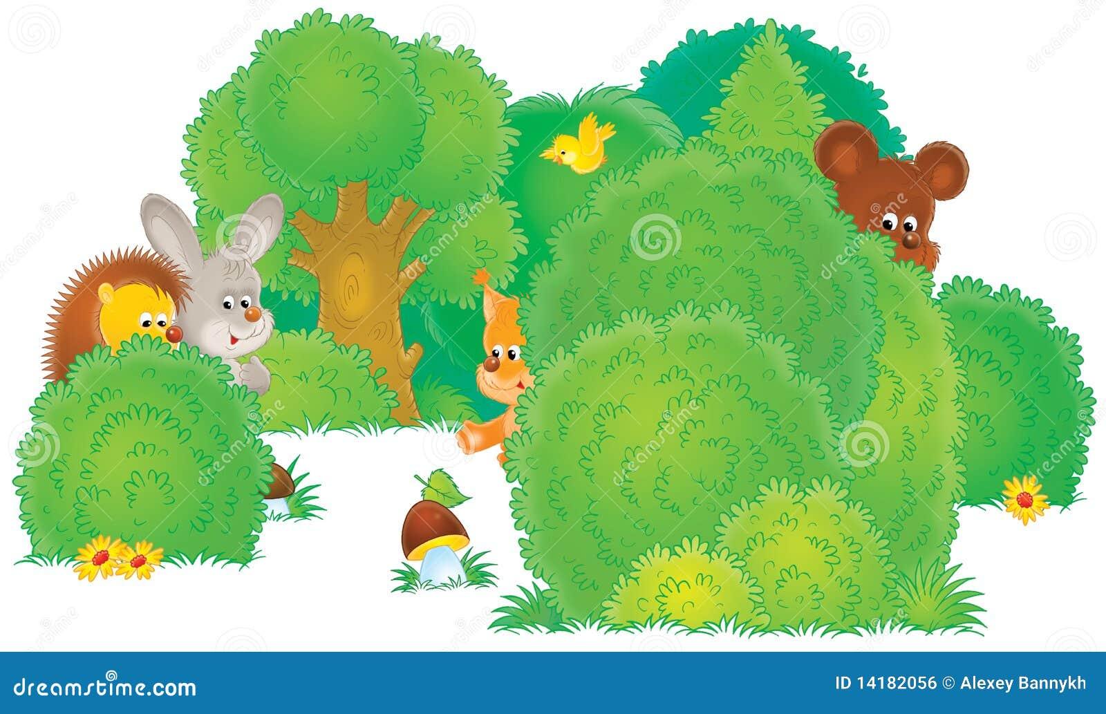 Animais selvagens em uma floresta
