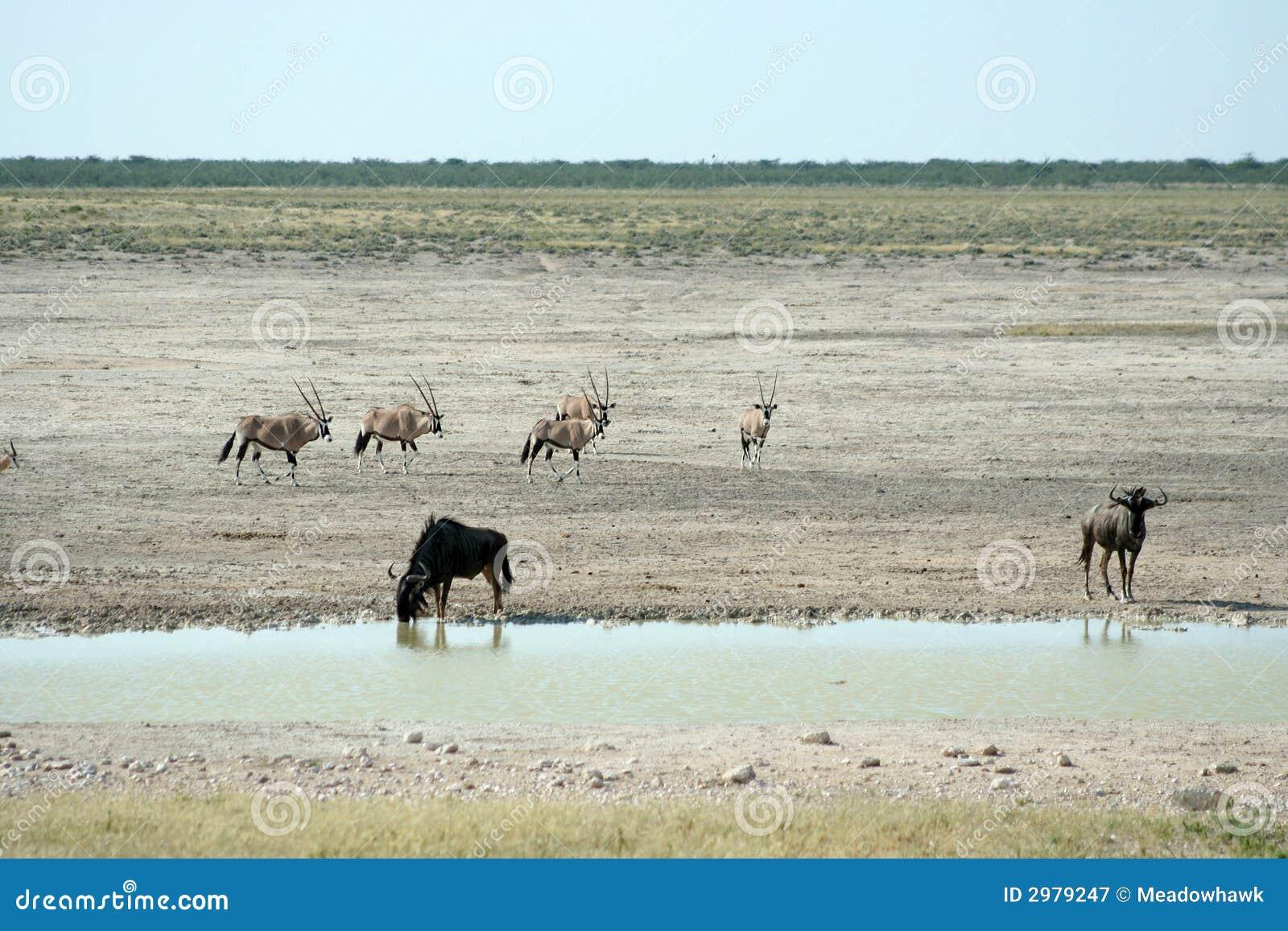 Animais selvagens no waterhole