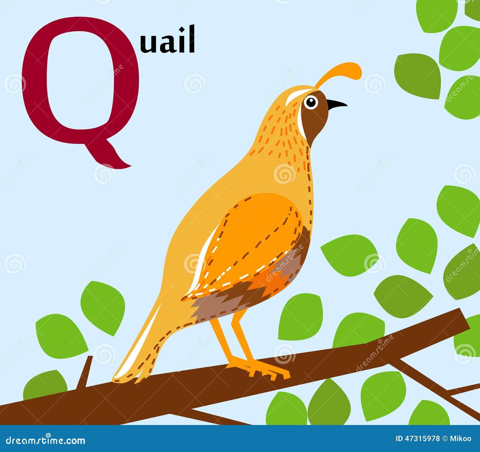 Letter Q Words Recognition Worksheet  All Kids Network