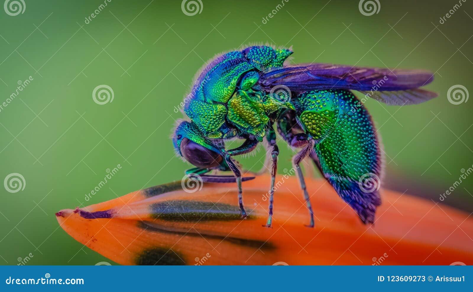 Animal bleu d insecte de mouche de bouteille