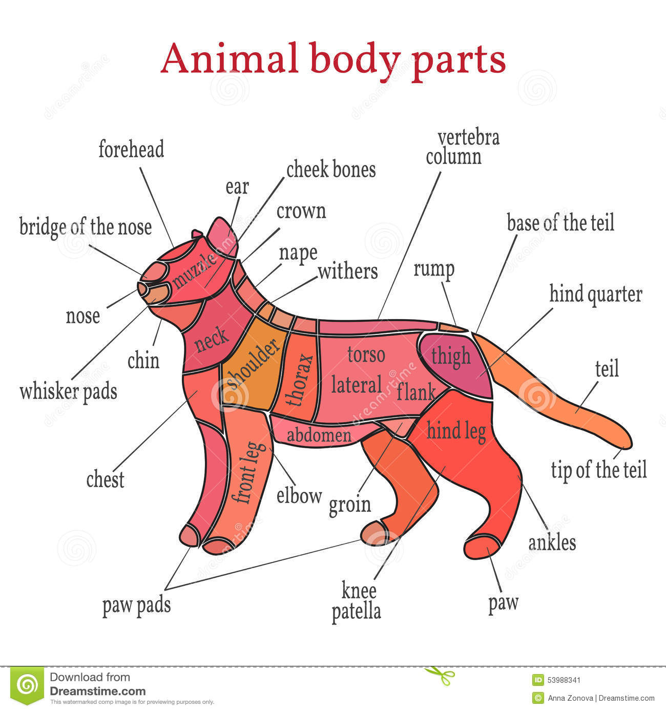 Animal Body Parts Stock Vector Image 53988341