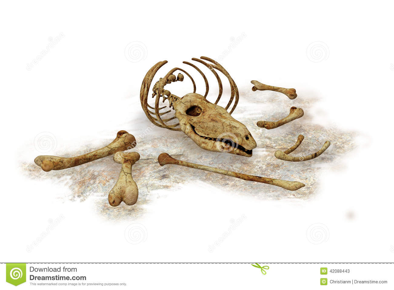 Jawbone stock illustrations 168 jawbone stock illustrations the bones of a dead or extinct animal on white background stock photos biocorpaavc Image collections