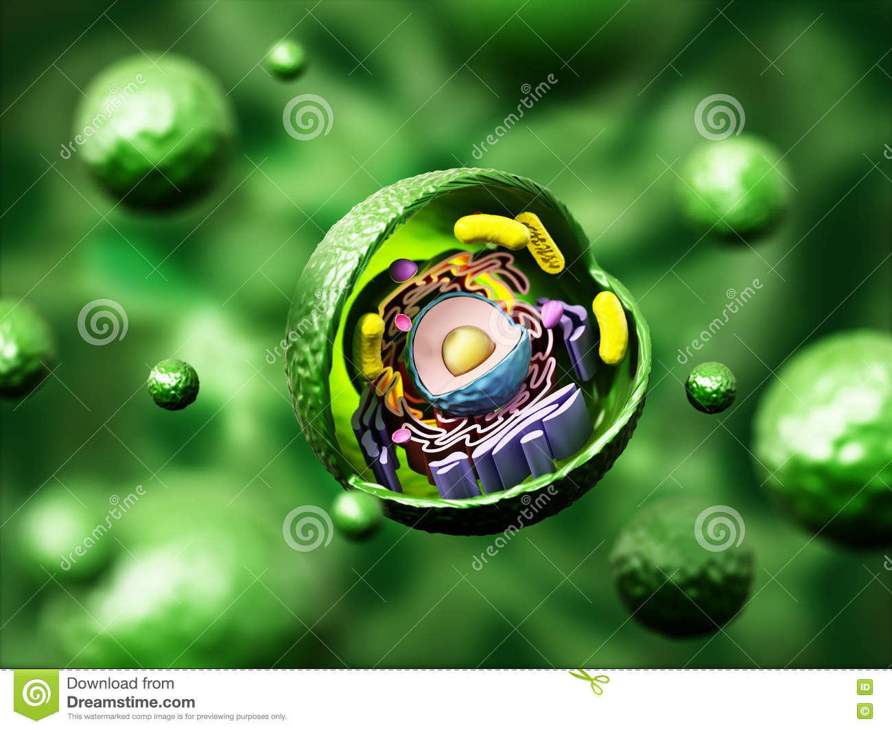 Animal Cell Anatomy On Green Background. 3D Illustration Stock ...