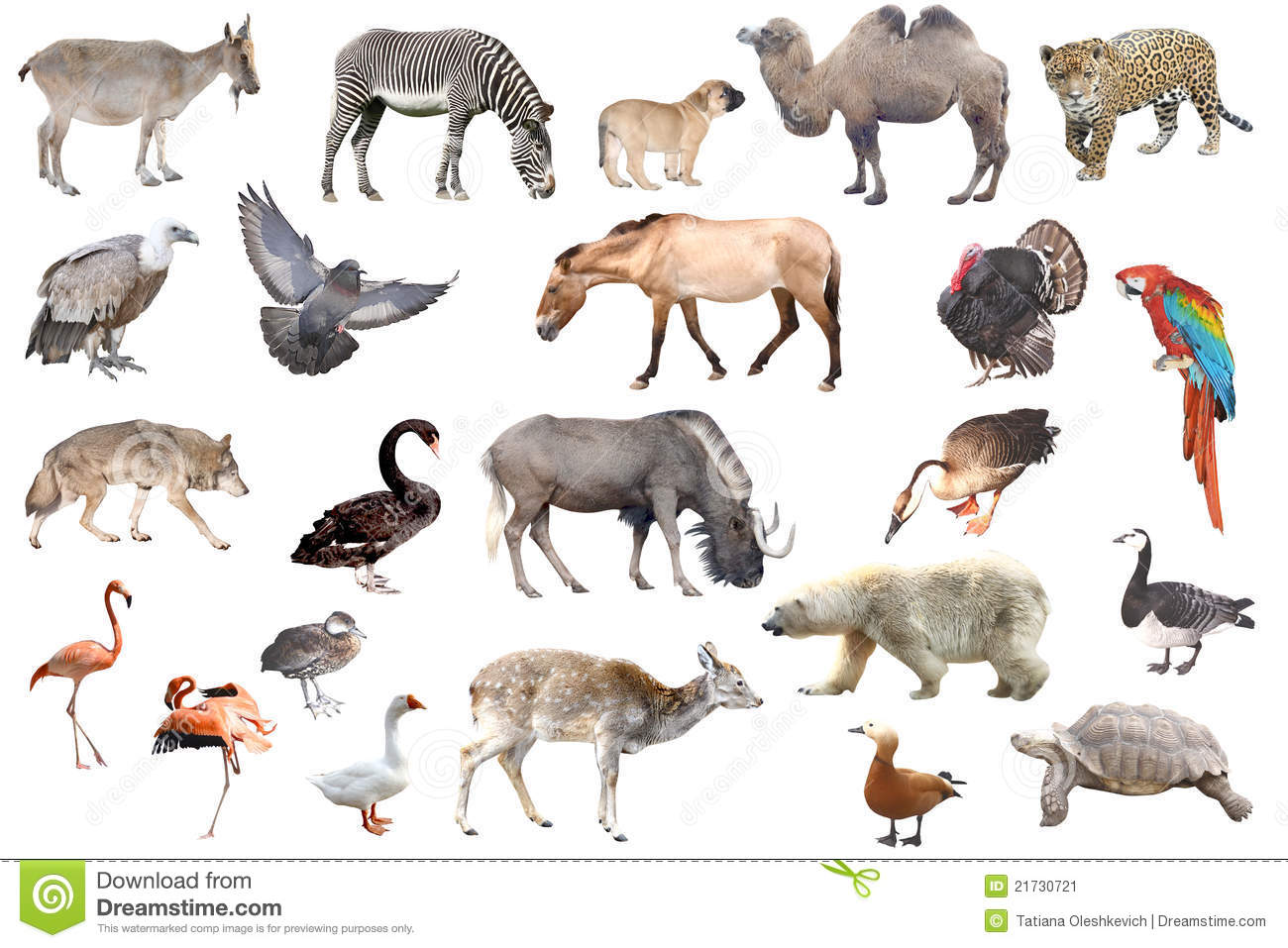 animal collection isolated