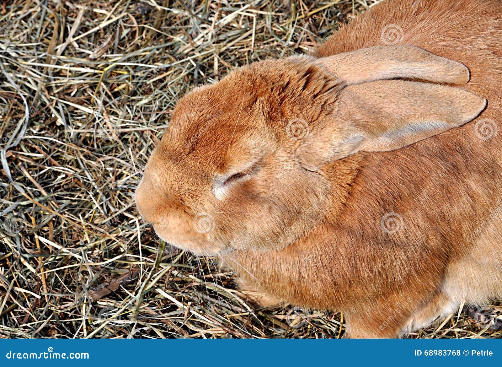 Animal - conejo