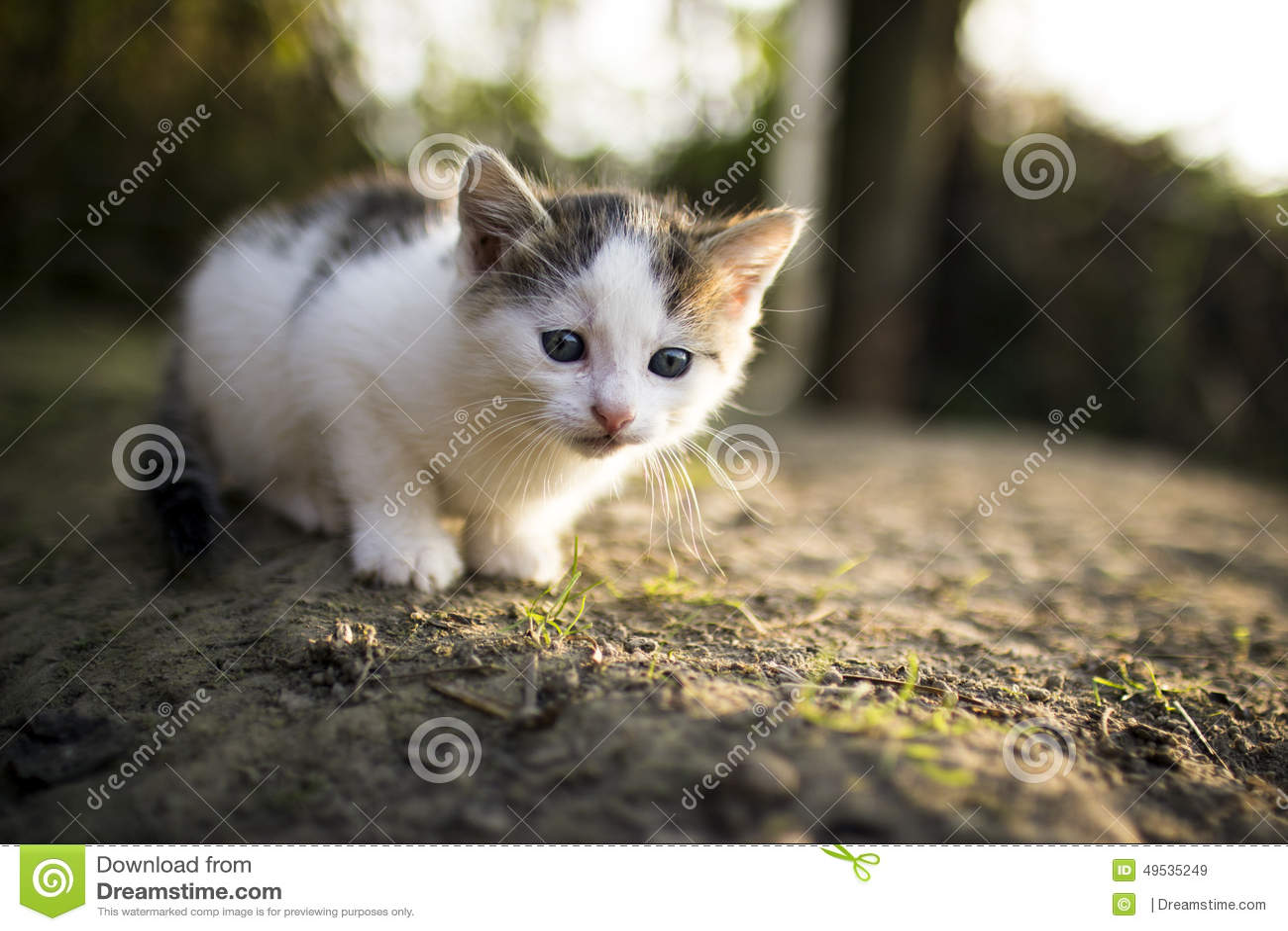 Animal de estimação animal doce só do gato