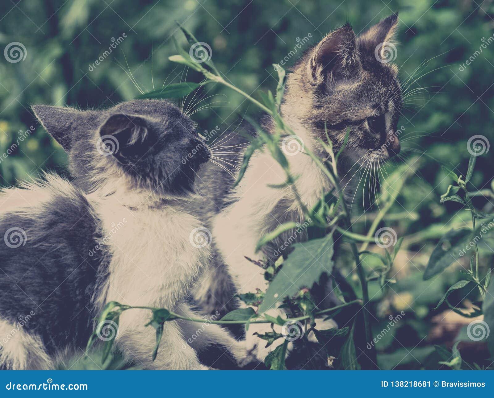Animal de estimação bonito da estática do gato do gatinho pobres adoráveis