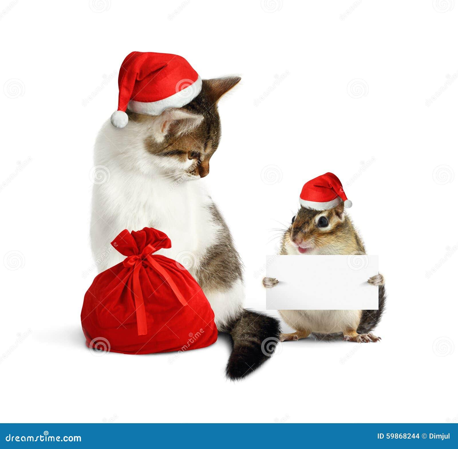 Animal de estimação engraçado do xmas, esquilo com placa e gato com chapéu de Santa e