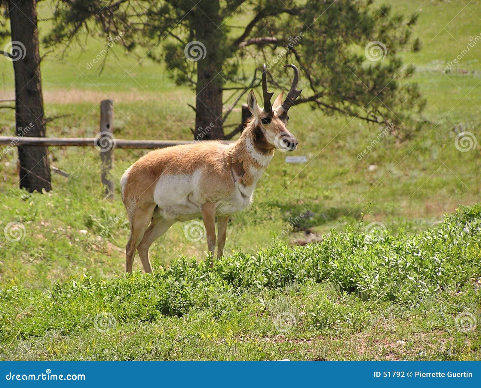 Download Animal de faune photo stock. Image du stationnement, état - 51792
