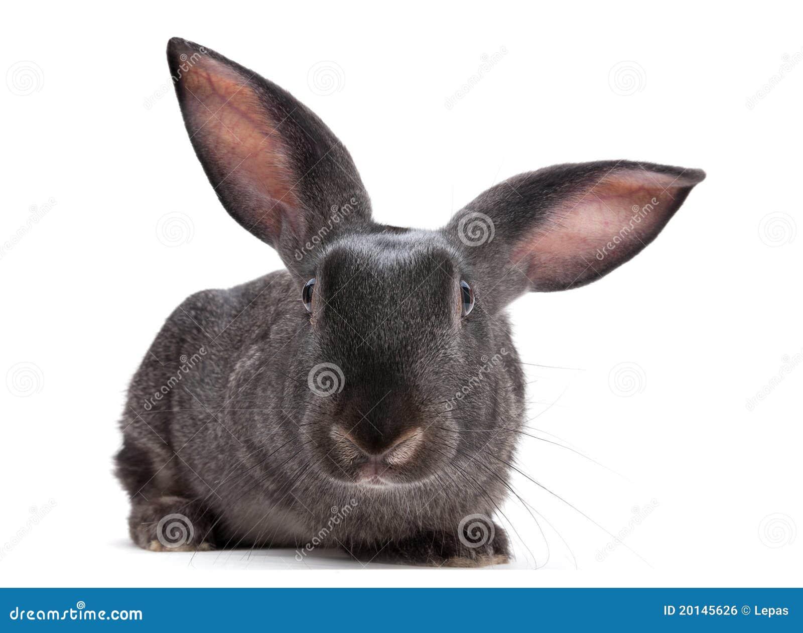 Animal de ferme de lapin