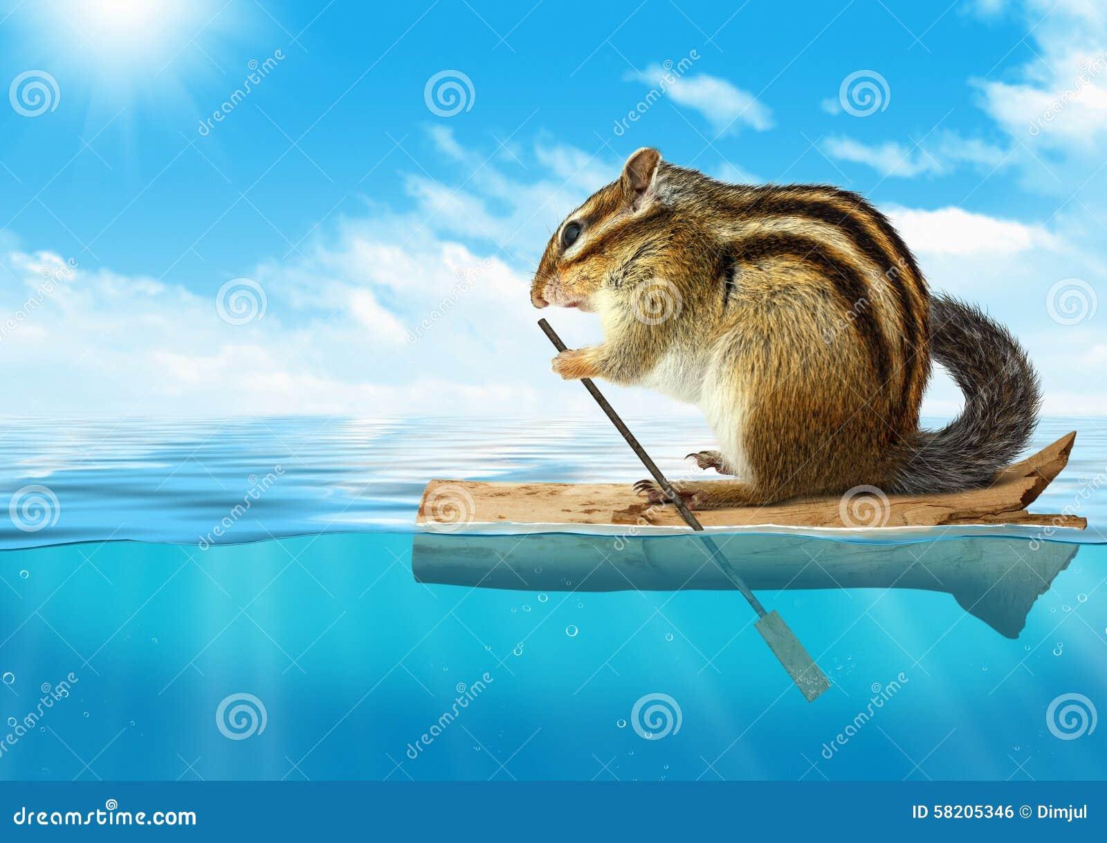 Animal divertido, ardilla listada que flota en el océano, concepto del viaje