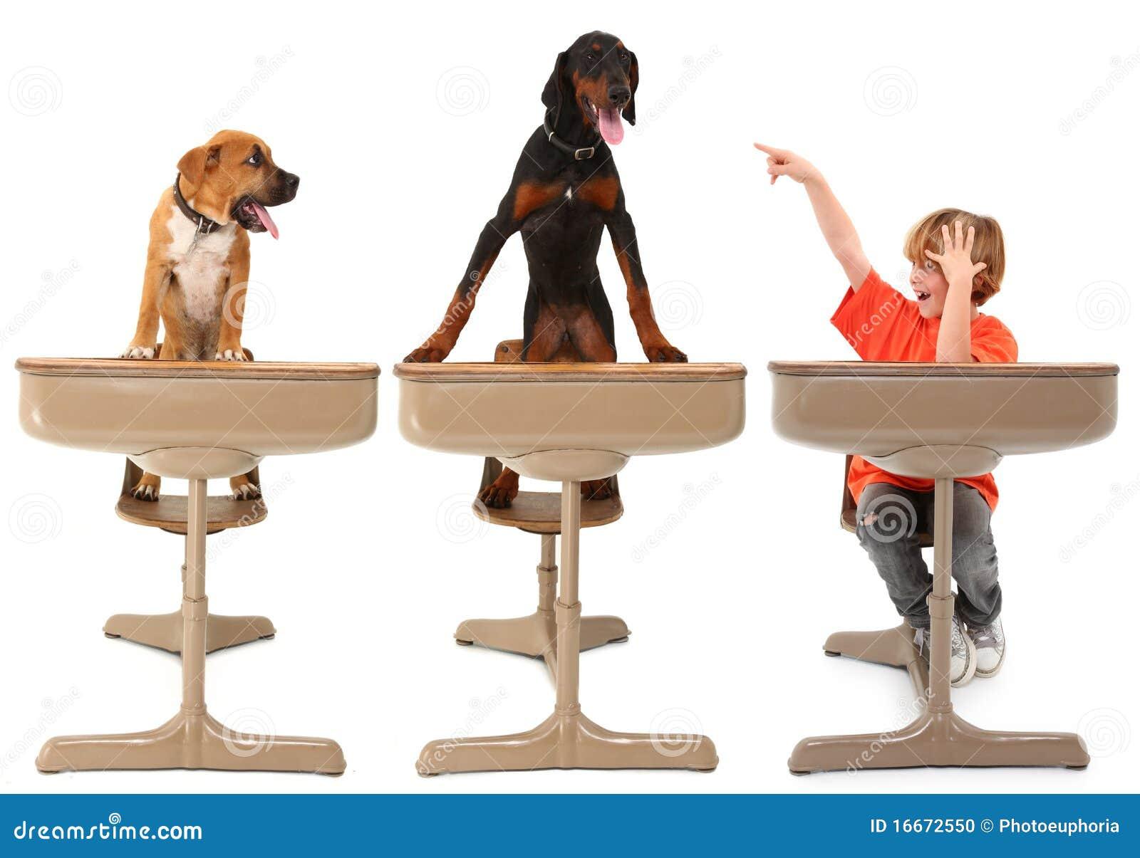 Music Classroom Design ~ The animal dog classroom stock photo image