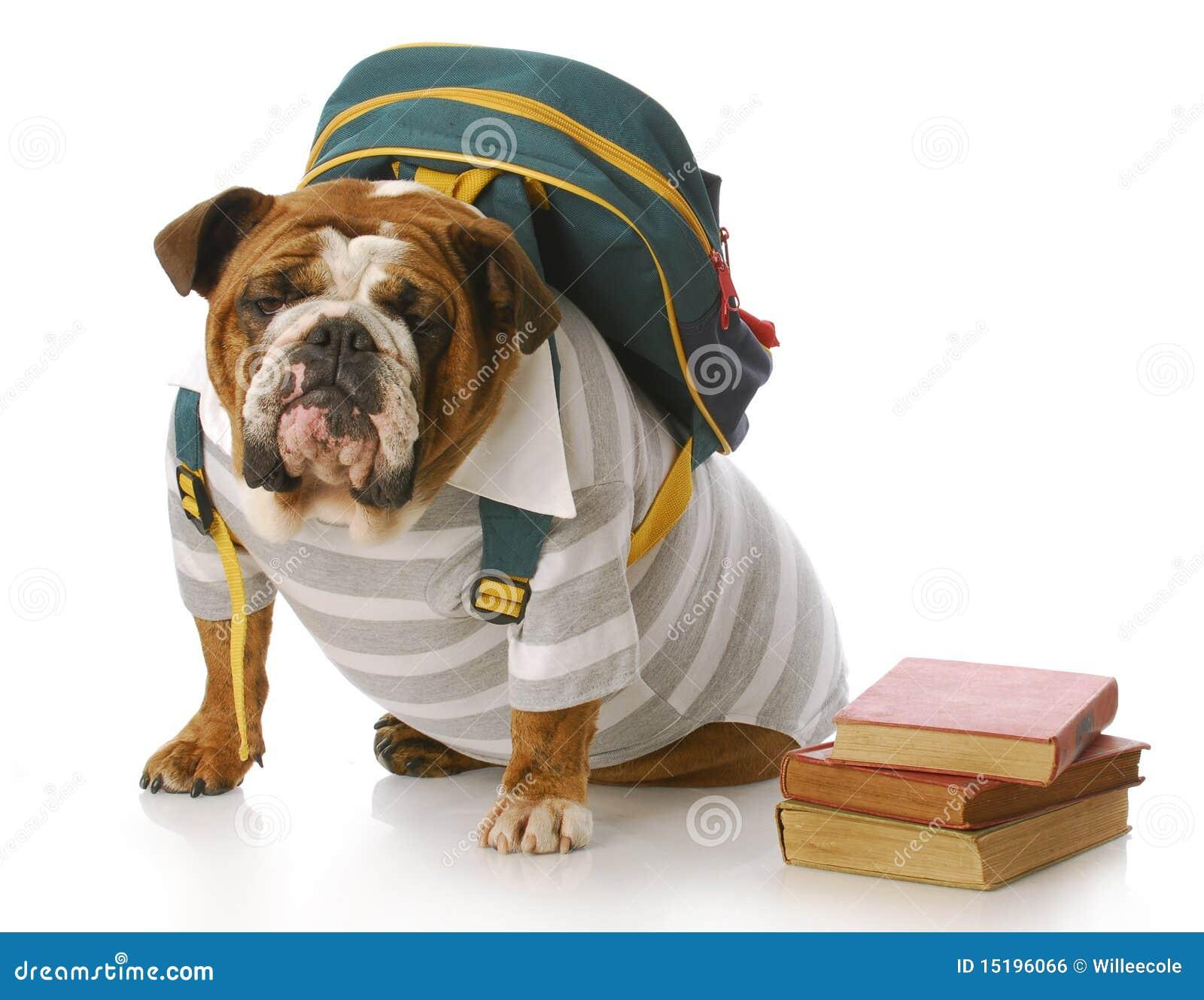 animal education royalty free stock image image 15196066 english bulldog clipart head english bulldog puppy clipart