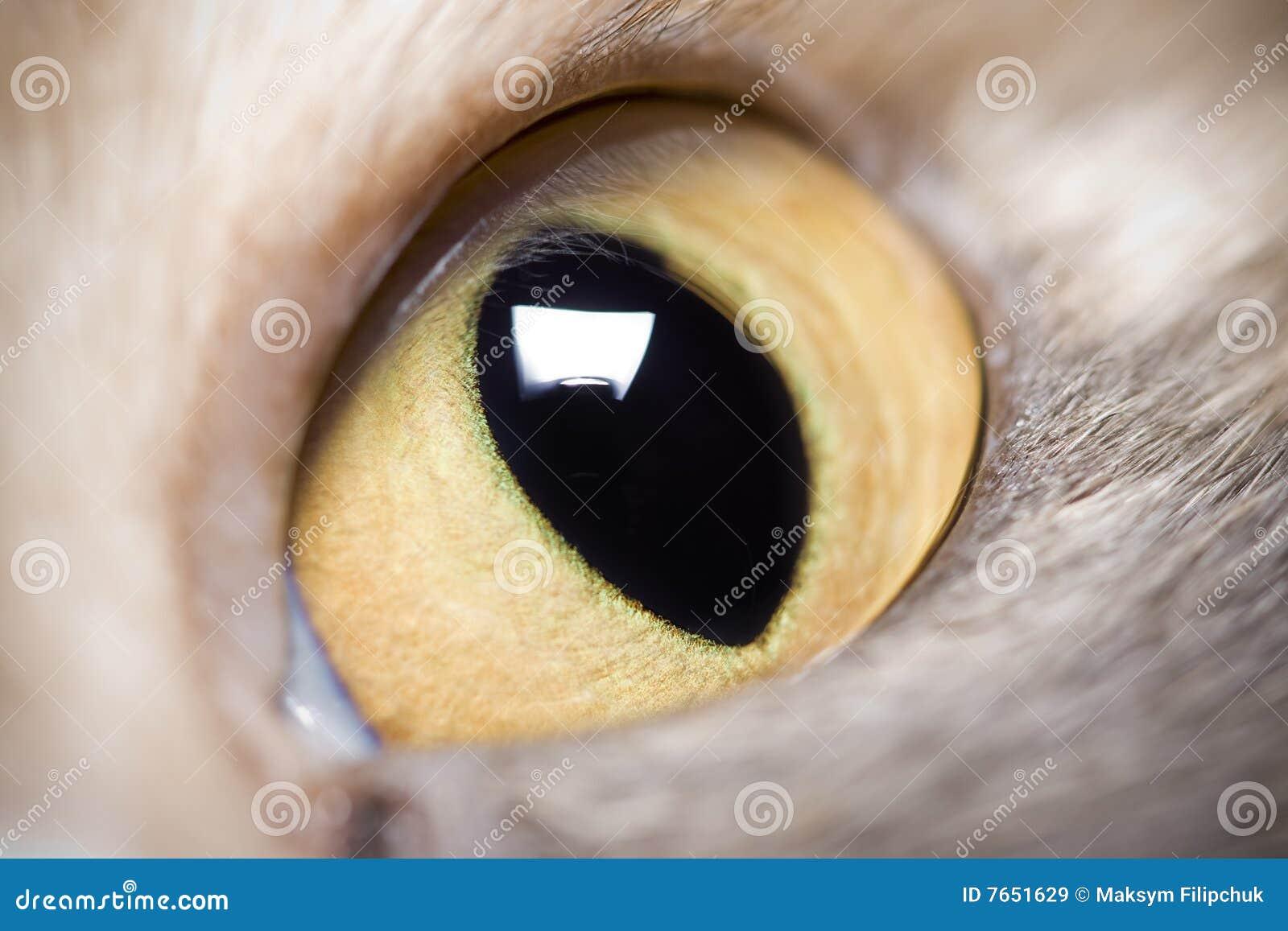 Animal Eye Royalty Free Stock Images - Image: 7651629