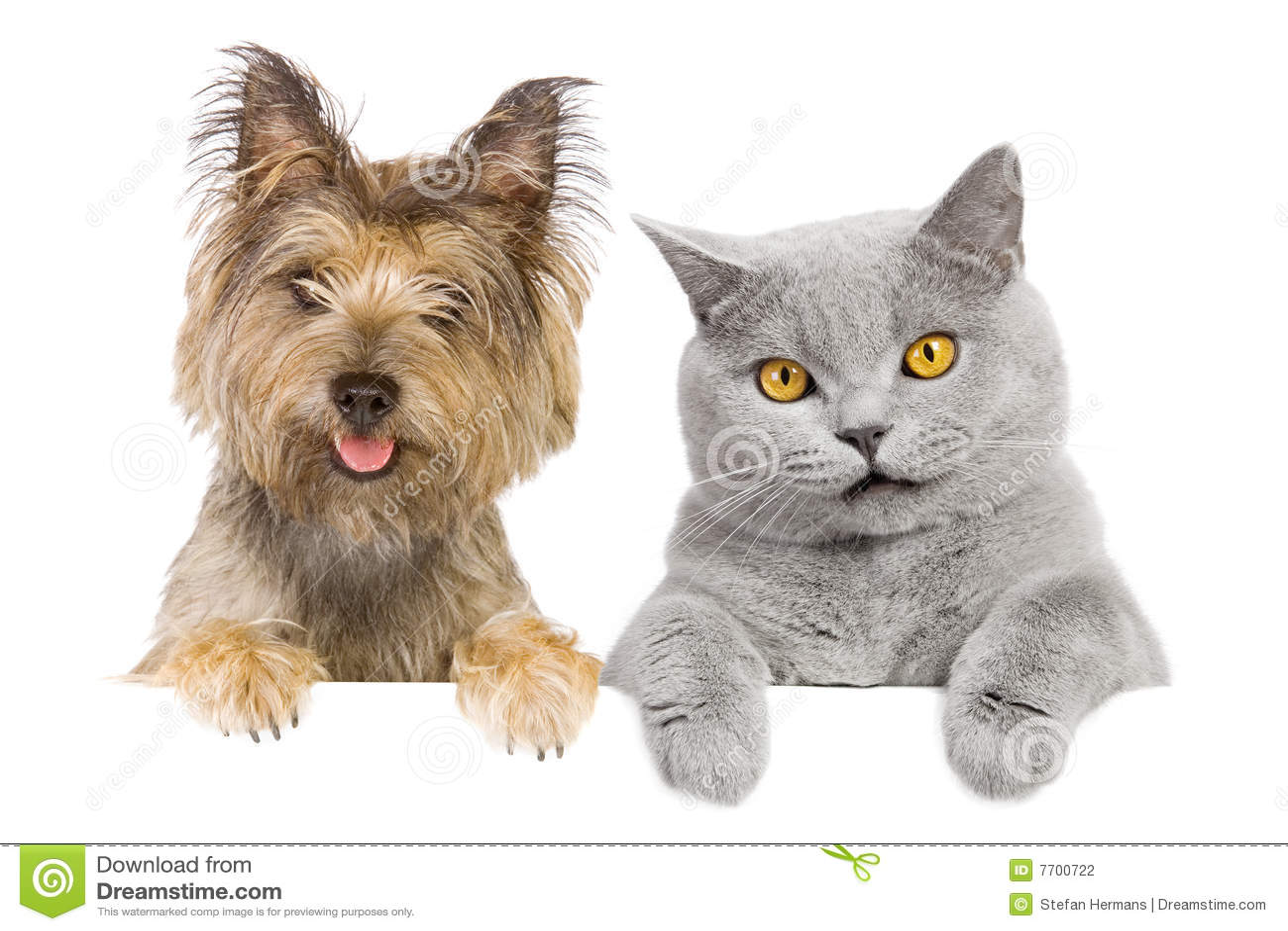Animal familier d amis