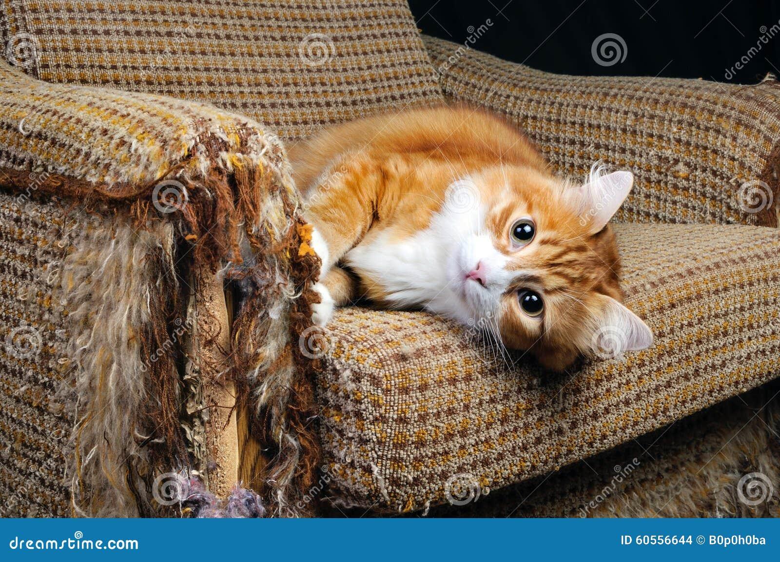 Animal familier et meubles
