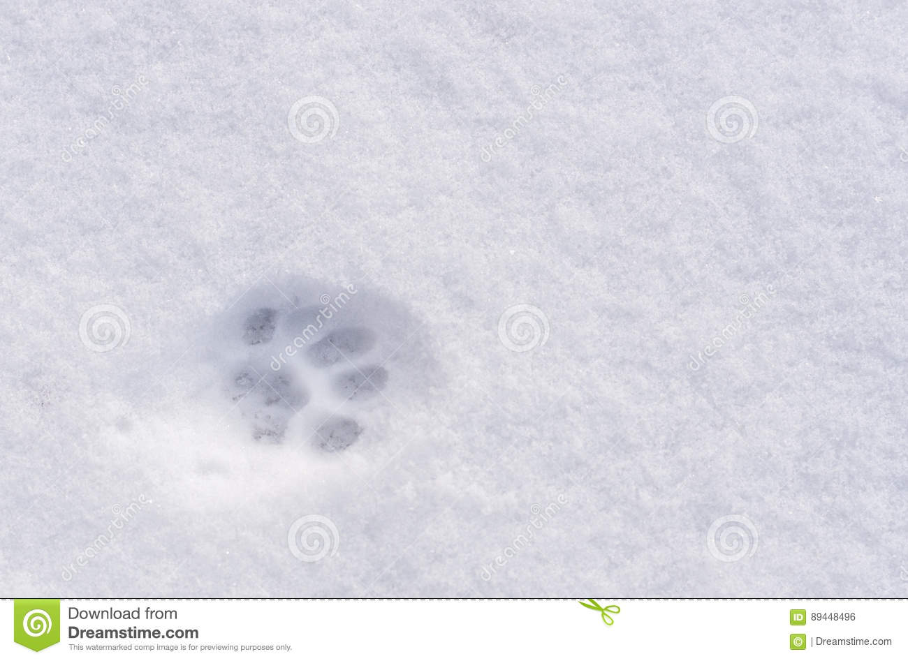 An Animal Footprint In The Snow Stock Photo - Image of shape