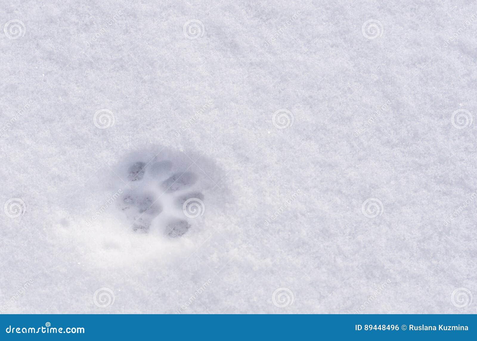 O Caminho pela neve - Página 2 Animal-footprint-snow-cat-dog-wolf-fox-89448496