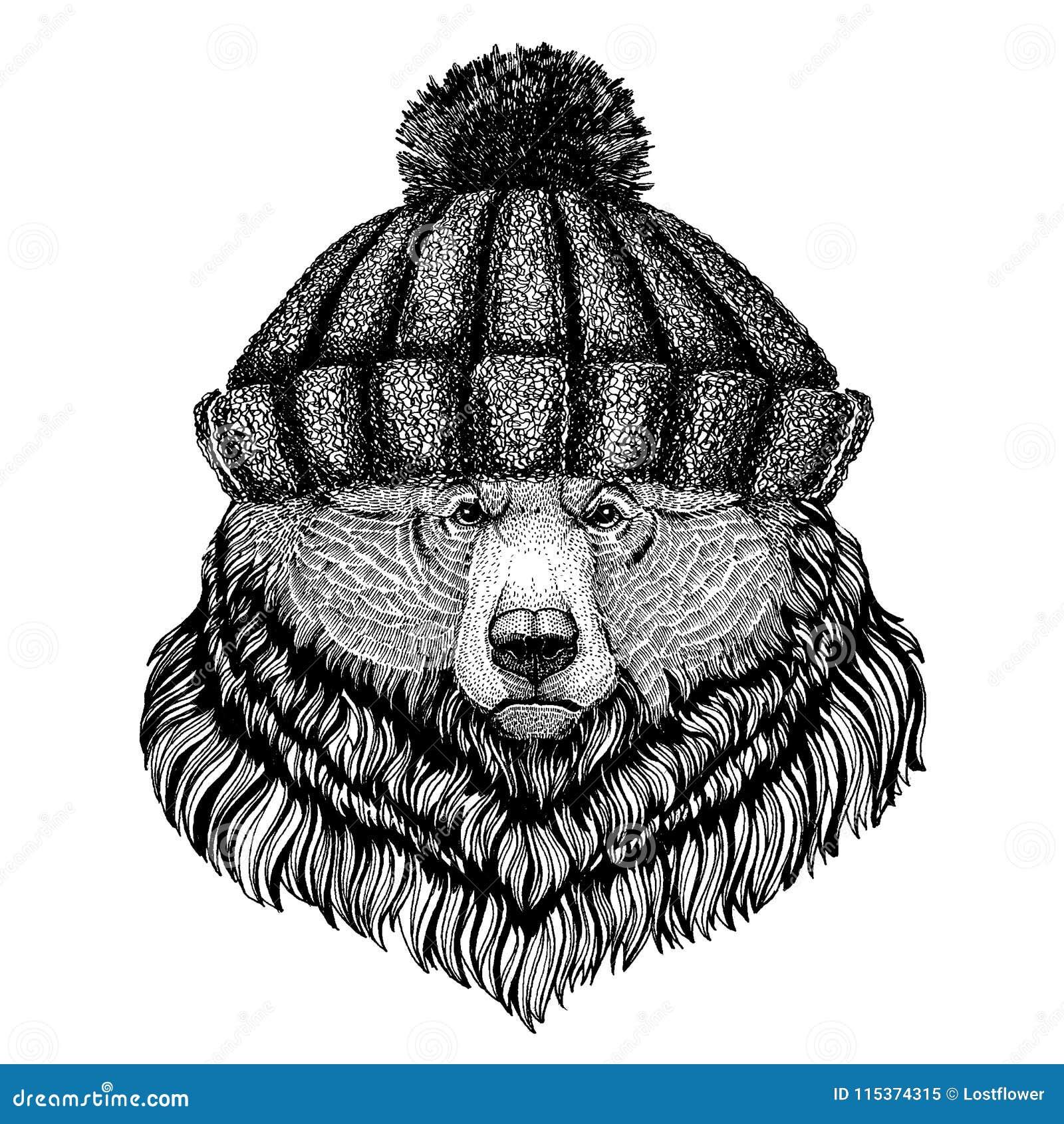 a8c2fc160b7d9 Animal fresco do urso selvagem grande do urso pardo que veste o chapéu  feito malha do