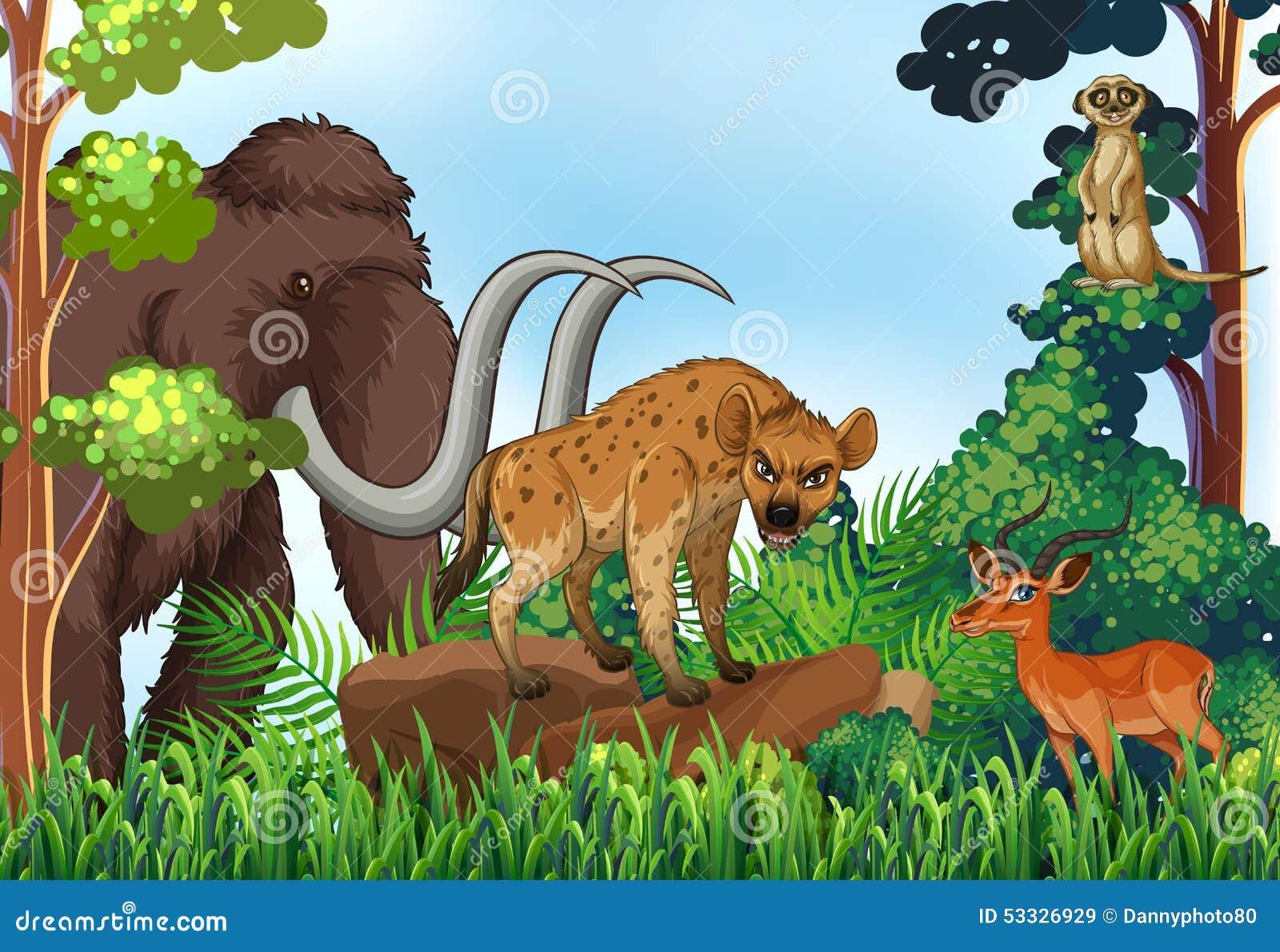 Jungle Kind