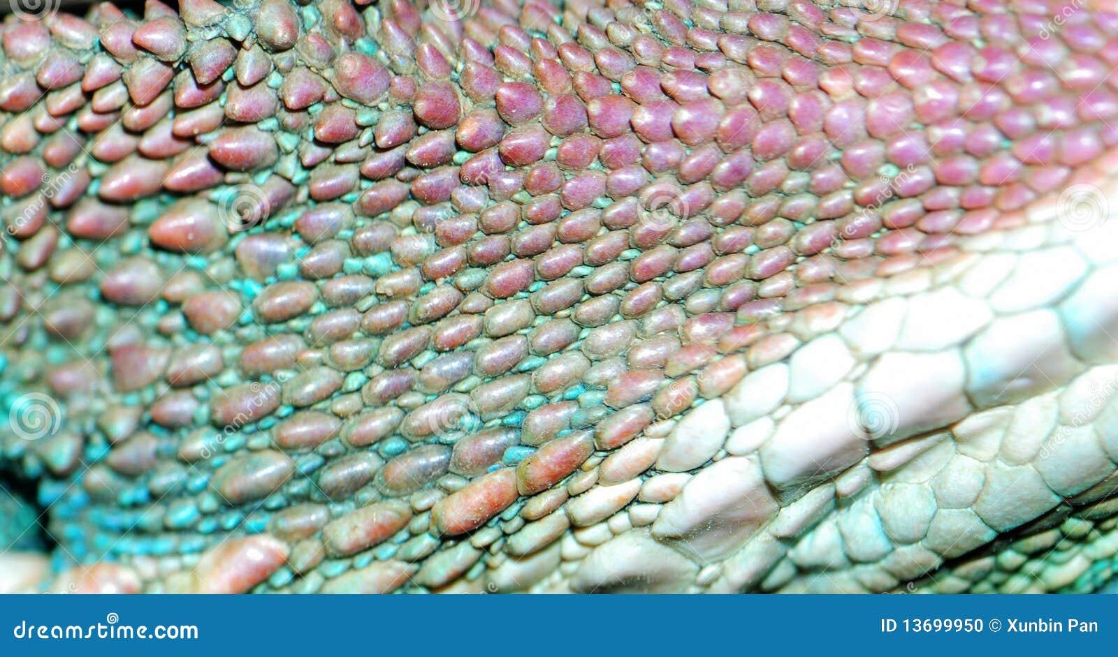 Animal Lizard Skin Texture Stock Photo Image 13699950