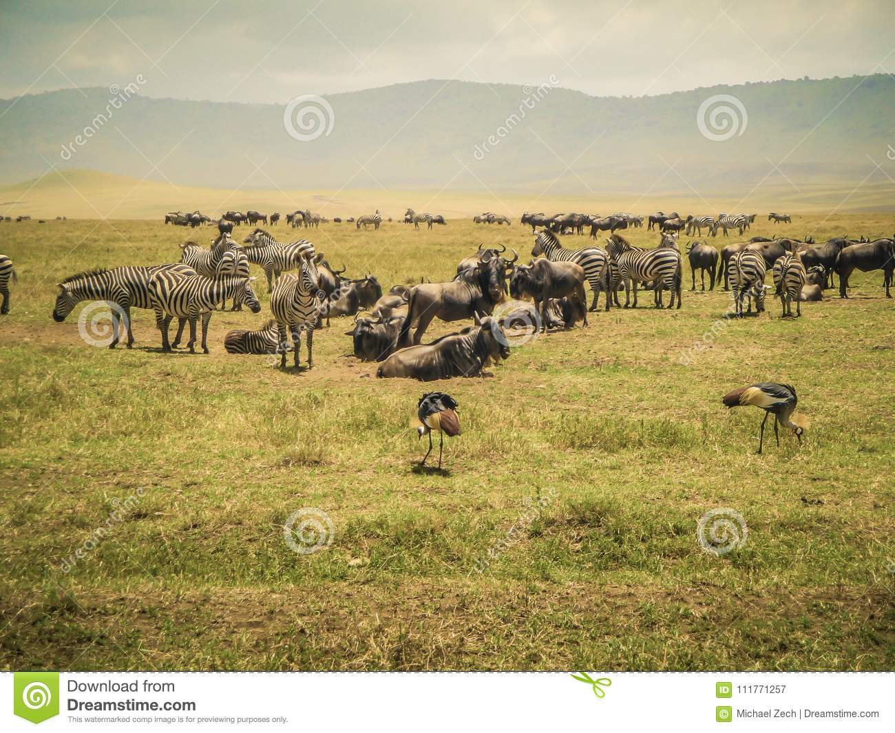 Animal nature and wildlife group of different herbivore animals