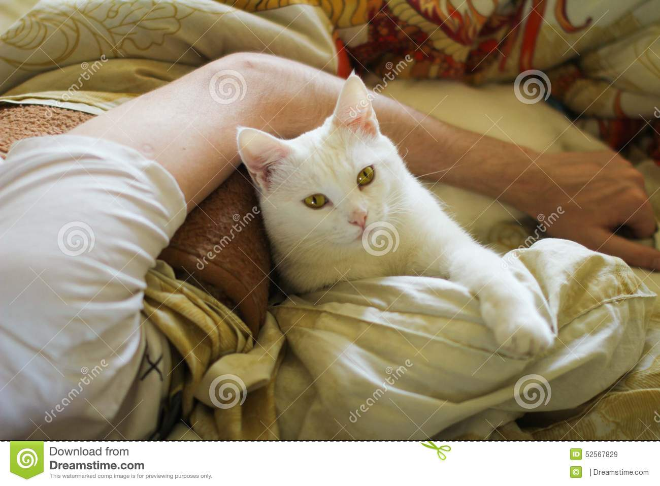 animal, pet, cat, white, bed, bedding, hand, mans hand, hug, serious, bodyguard