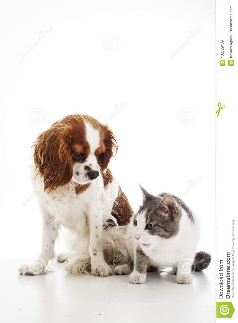 Animal Pet Friends Cat And Dog Friends Puppy And Kitten Together