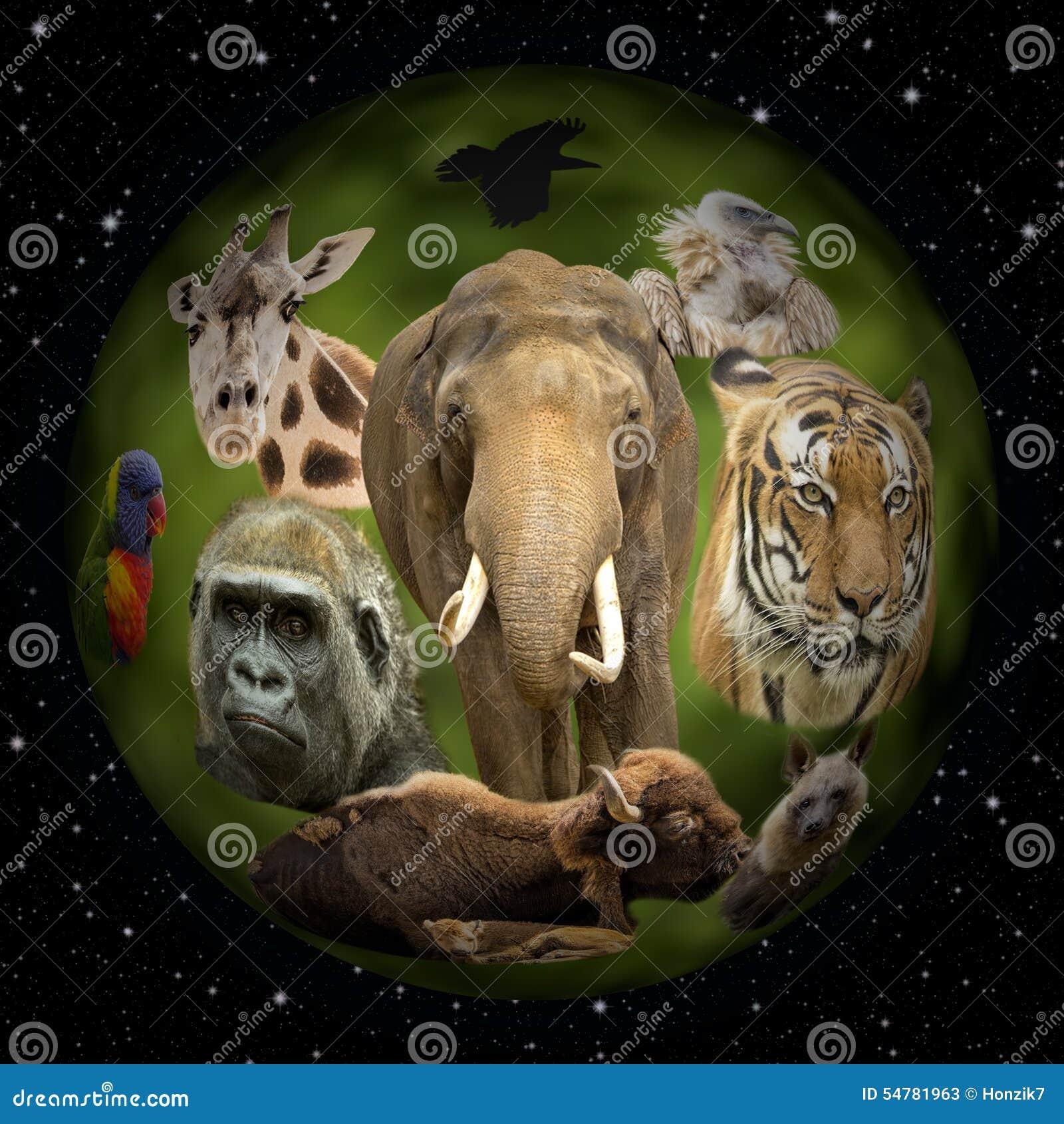 planet earth animals - photo #39