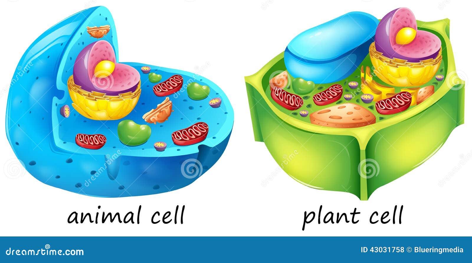 animal plant cells lllustration white background 43031758